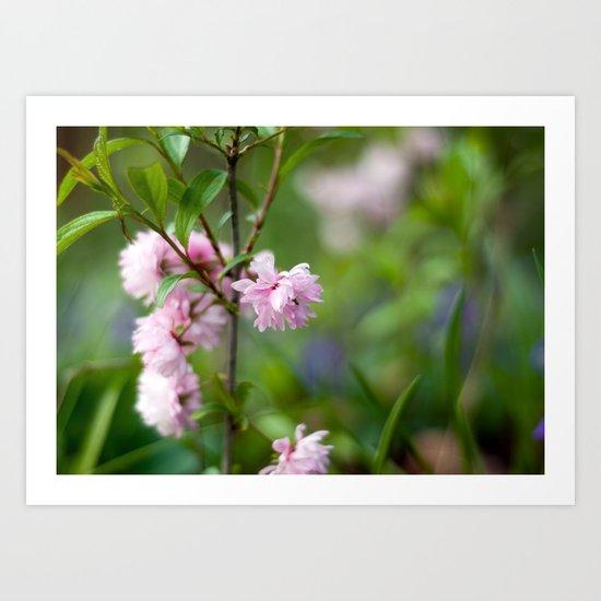 Flowering Almond Blossoms II Art Print