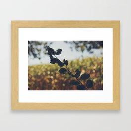 Les Landes (8) Framed Art Print