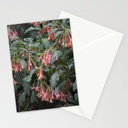 Longwood Gardens - Spring Series 252 Stationery Cards
