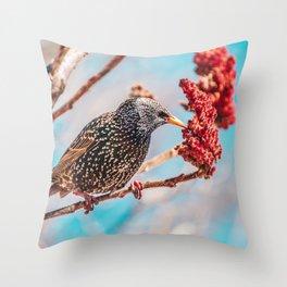 Hungry Starling, Bird Photograph Throw Pillow