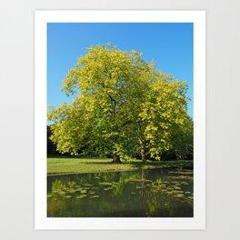 The English Garden Art Print