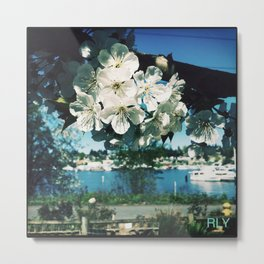 Cherry Blooms Overlooking Lake Union  Metal Print