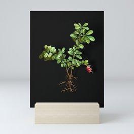 Vintage Lingonberry Botanical Illustration on Black (Portrait) Mini Art Print