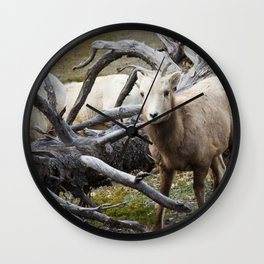 White Goats & A Dead Tree Wall Clock