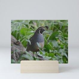 mr quail Mini Art Print