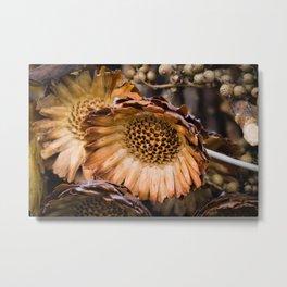 Dry sunflower Metal Print