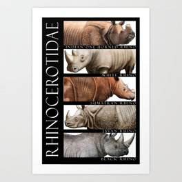Rhinos of the World Art Print