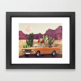 Llamas on the road 2 Framed Art Print