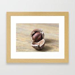 cracked nut hazelnut Framed Art Print