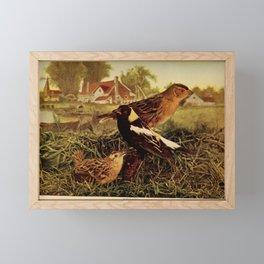 Neltje Blanchan - Bird Neighbours (1903) - Bobolinks Framed Mini Art Print