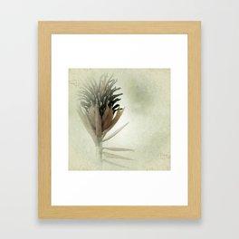 Bromeliad Flower Botanical Photograph Framed Art Print
