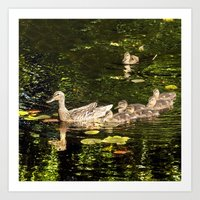 ducks Art Prints featuring Ducks by LudaNayvelt
