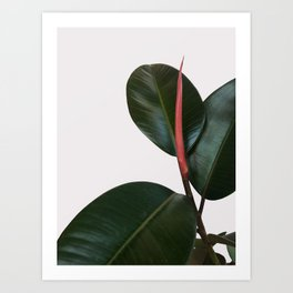 New Growth Art Print