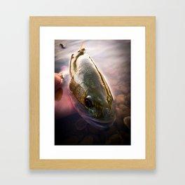 Largemouth Bass Framed Art Print