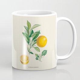 Orange Antique Botanical Illustration Coffee Mug