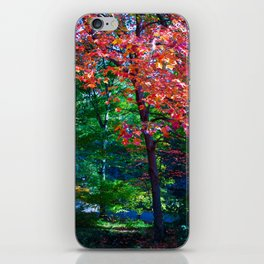 Fall forest iPhone Skin