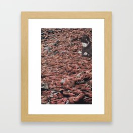 Counting Walrus Framed Art Print