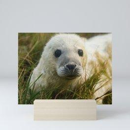 Cute White Seal Pup Mini Art Print