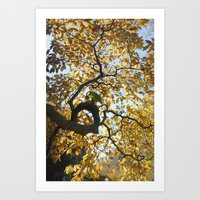black and gold Art Prints featuring Black & Gold by Max Ross
