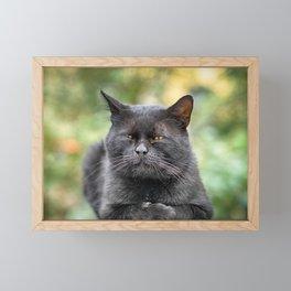 Stray cat (2012-8SPB-WOC) Framed Mini Art Print