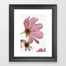 Pink Cosmos Framed Art Print