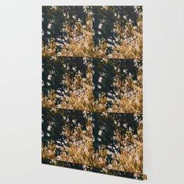 Rainy trees Wallpaper