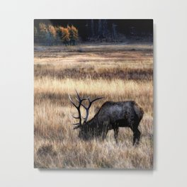 Meadows Of Horseshoe Park Metal Print