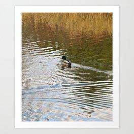 Duck on Pond Art Print