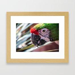 Colorful Guacamaya Framed Art Print