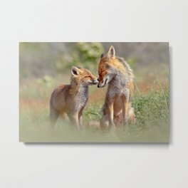 Fox Felicity - Mother and fox kit showing love and affection Metal Print