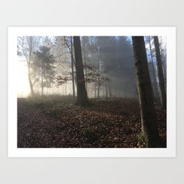 Morning in the forest  Art Print