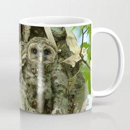 Barred owl baby camouflage Coffee Mug