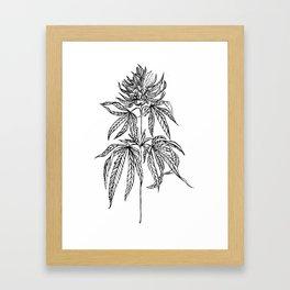 Cannabis Illustration Framed Art Print