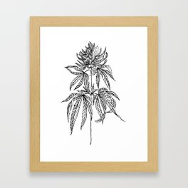 Cannabis Illustration Framed Art Print