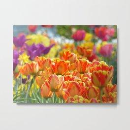 Brooklyn Tulips Metal Print