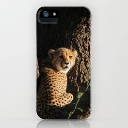 Cute little baby cheetah | Wildlife travel photography | Fluffy wall art iPhone Case