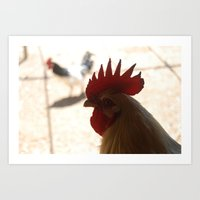 Rooster Stare Art Print