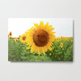 Sonnenblumen 1 Metal Print
