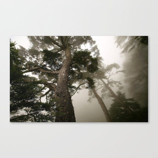 She follows me into the woods Canvas Print