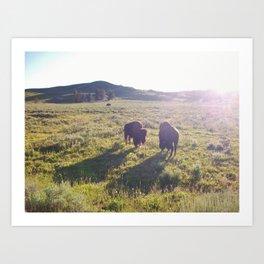 Wild Buffalo Art Print