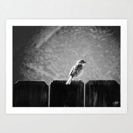Sparrow BW Art Print