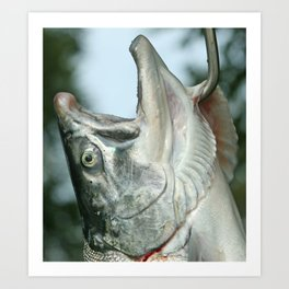 Alaskan salmon Art Print