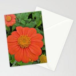 Zinnia flowers Stationery Cards