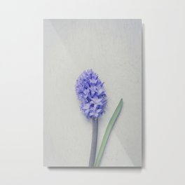 Lovely Bright Lilac Hyacinth Metal Print