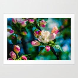 Crabapple flower and buds Art Print