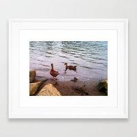 ducks Framed Art Prints featuring Ducks by Morgan.Andrews.Art