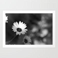 White Flowers Art Print