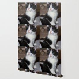 black and white kitten Wallpaper