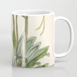 Flower meconopsis simplicifolia Coffee Mug