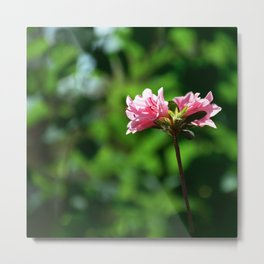 Blossoms One Metal Print